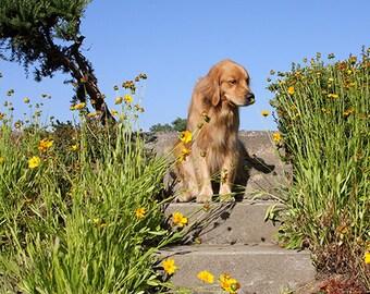 Smell the Flowers, Golden Retriever Photo, Blank Card