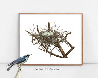 NEST with four BLUE EGGS - Printable Instant Download - a lovely 1800's bird nest illustration for framing, totes, clothes, cards, etc.