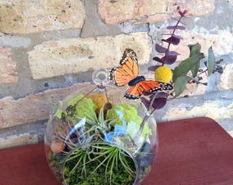 Butterfly and Air Plant Terrarium - A Unique Birthday or Housewarming Gift