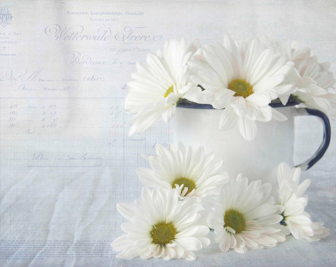 Daisies, Photography,  Floral Photography, Nature Photography, Botanical Photography