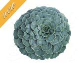 CACTUS flower, Instant Download, digital clipart, succulent, red, pink, green, JPG and PNG, botanical illustration no.437