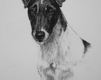 Smooth Fox terrier dog fine art Limited Edition print from an original charcoal drawing