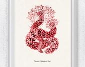 Sea Cucumber in Red  -  Home decor art Antique sealife Illustration - sea life print-Marine  sea life illustration A4 print SPA077
