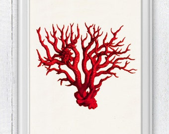 The great Red coral - Antique Illustration  , sea life print- Marine  sea life illustration A4 print SPC071