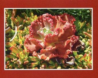 "Catalina Island ""Rose"" - photo card"
