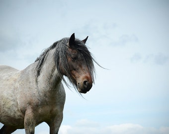 Equestrian decor, equine art, horse photo, rustic horse, animal photograph, dales pony