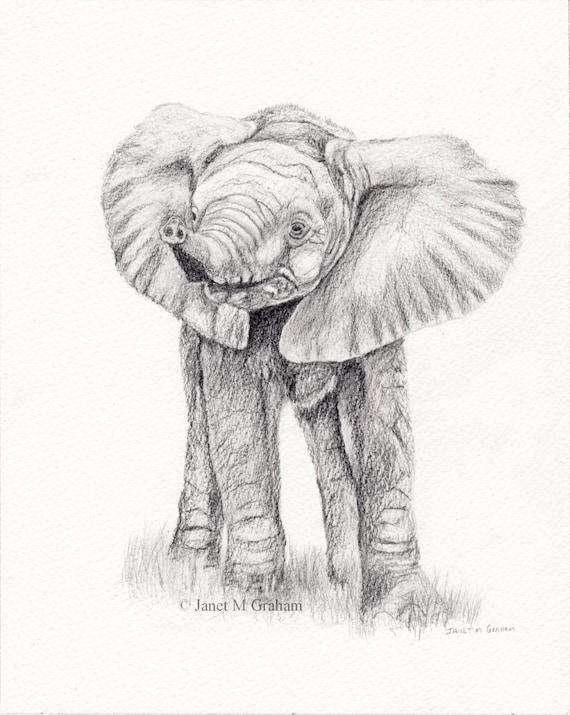 baby elefant afrikanische tierwelt tier bar bleistift. Black Bedroom Furniture Sets. Home Design Ideas