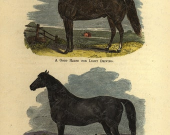 Antique Original Hand colored Engraving of Horse - Pair of Good horses