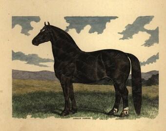 Antique Original Hand colored Engraving of Horse - Coach Horse