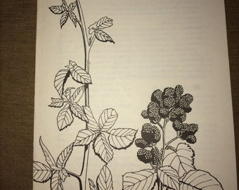 Home and Garden Bulletin, Thornless Blackberries For The Home Garden