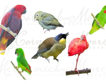 Tropical Birds Overlay - Bird Parrot Red Feathers Nature Overlay