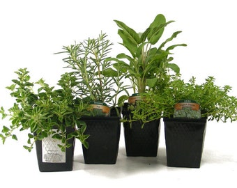 Herb Collection Gourmet Assortment of  Organic Herbs Contains Set of 4 Live Plants - Great Gift Herb Kit Non-GMO