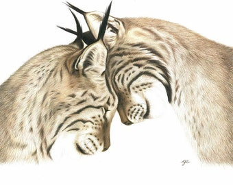 8x10 Print - Bobcat Art Print - Wildlife art print of a bobcat drawing, 8 x 10 in