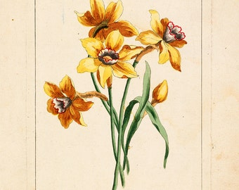 "Louis Tessier : ""Narcisse"" (18th century) - Giclee Fine Art Print"