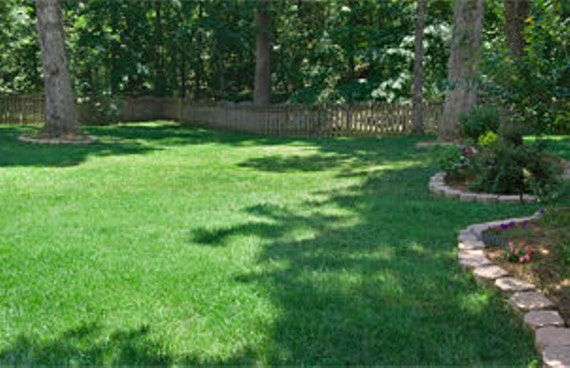 Lawn Grass Seeds Combat Extreme Transition Zone Grass Seed