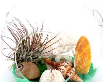 Underwater Symphony ™ Terrarium, Hanging AIR PLANT TERRARIUM Kit, Tillandsia Glass Globe ~ Beach Nautical ~ Birthday Gift Housewarming Gift
