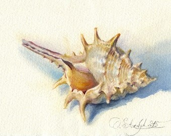 Seashell painting - Sea shell watercolor painting Seashell art Seashell print