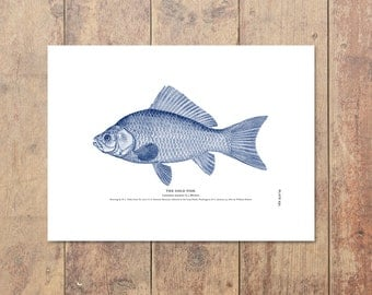 Goldfish Art in Blue-Fishing Art Nautical Decor Beach Decor Goldfish Print Gifts For Dad Ocean Home Decor Boys Room Decor Father's Day Gift