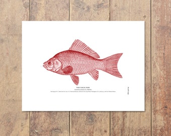 Goldfish Art in Red- Fishing Print Nautical Decor Beach House Home Decor Ocean Wall Decor Beach Decor Ocean Home Decor Gifts For Dad