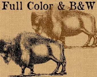 Buffalo Bison American Sepia Vintage Printable Image INSTANT Download Digital Antique Clip Art Transfer Art Print jpg jpeg pdf png V16