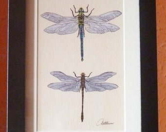Dragonfly Print,Dragonfly Picture,Dragonfly Wall Art - Print of original  framed. Emperor and Golden Ringed Dragonflies. Popular gift choice!
