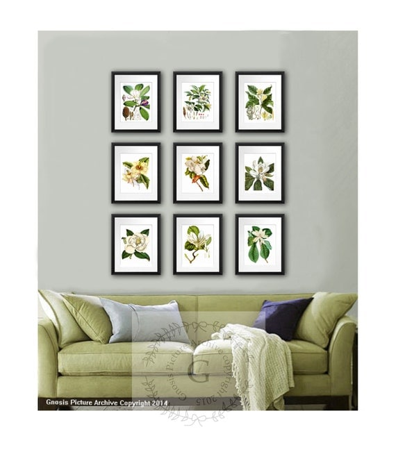 Magnolia flowers botanical print set of 9 botanical for Apples decoration for home