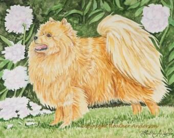 "8x10 giclee print, Pomeranian, ""Petal"", Hand Drawn Dog Art, Pomeranian among the peonies, Dog Art, DOG LOVER GIFT"