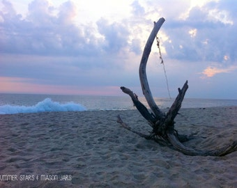 Driftwood Washed Ashore Print - Landscape Photography
