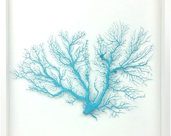 Framed sea fan - aqua dyed natural Gorgonian coral