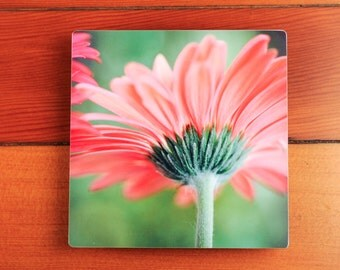 Flower Photography Print on Metal