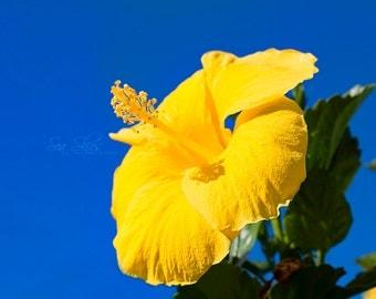 Hibiscus Flower, Floral Fine Art Photography, Summer Wall Art, Flower Photograph