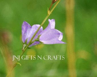 Bell flower Spring Flowers Digital Downloadable