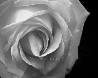 Black and White rose flower photography,wall decor, fine art photography print