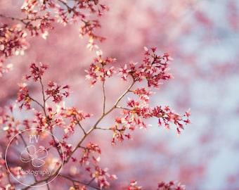 Flowering Plum Tree 8x10 Art Print