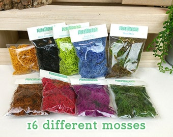16 different mosses to choose from
