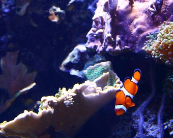 Photograph - Metallic Print - Nemo