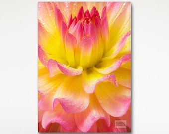 Stretched Canvas Dahlia Flower, Floral Photography, Pink Yellow Wall Art, Fine Art Print