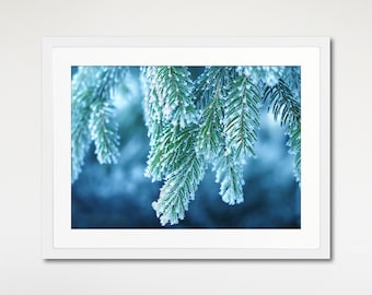 Blue Winter Spruce Art Print Framed, Blue Wall Art, Nature Photography, Home Decor, Wall Art Print, Nature Print