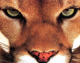 Mountain Lion Poster, Cougar, Puma, Catamount, Predator, Big Cat, Cats