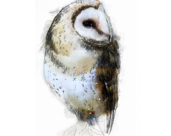 Artistic sketch of a barn owl on watercolour paper.