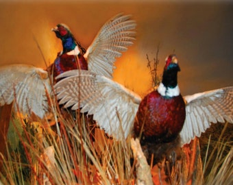 Flying Pheasants Fine Art Photography Wall Photo Print, Golden Pheasant Hunt Hunting Hunter Birds Ducks Animal Taxidermy Wildlife