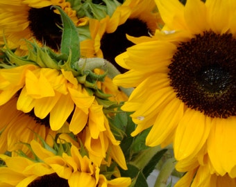 Sunflower Photography, France, Nature, Photo Art Cards,Wall Art, Poster, Greeting Card,Carte Blanche Images