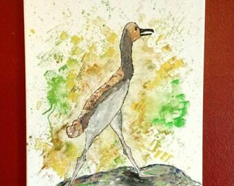 The Baby Sandhill Crane