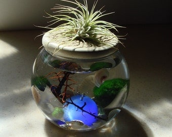 Zen. Garden. Blue Cats Eye Sphere. Stone Top.Air Plant and Marimo Ball. Unique. Terrarium