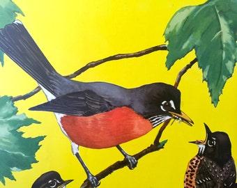 Robin Red Breast Bird Print ~Vintage Book Print, Illustration, Book Plate ~Nursery decor ~ Jacob Bates Abbott ~ Birds at home 1942