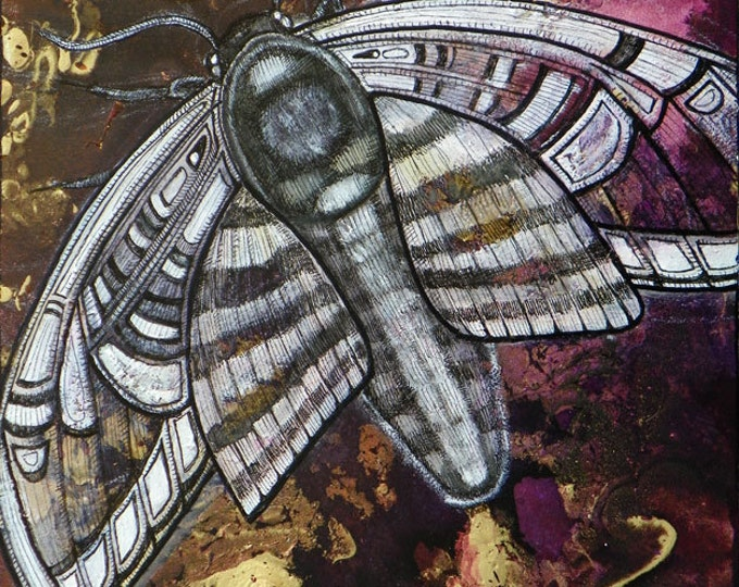 Nightflight Moth Insect Art Print by Lynnette Shelley