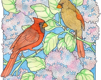 Cardinals and Hydrangeas - Archival Print