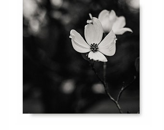 Black and white photography, dogwood photo, black and white art, nature print, floral decor, flower art, home decor, black and white photo