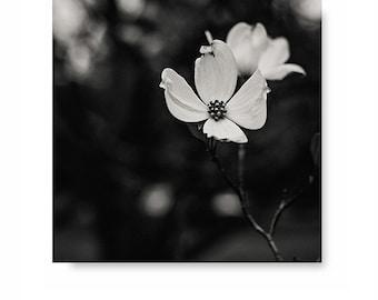 Black and white flower print, dogwood photo, black and white art, nature print, floral decor, flower art, home decor, black and white photo