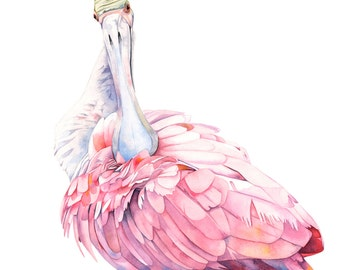 Spoonbill print of watercolor painting S2715  5 by 7 size print wall art print - bird art print, spoonbill watercolor painting,
